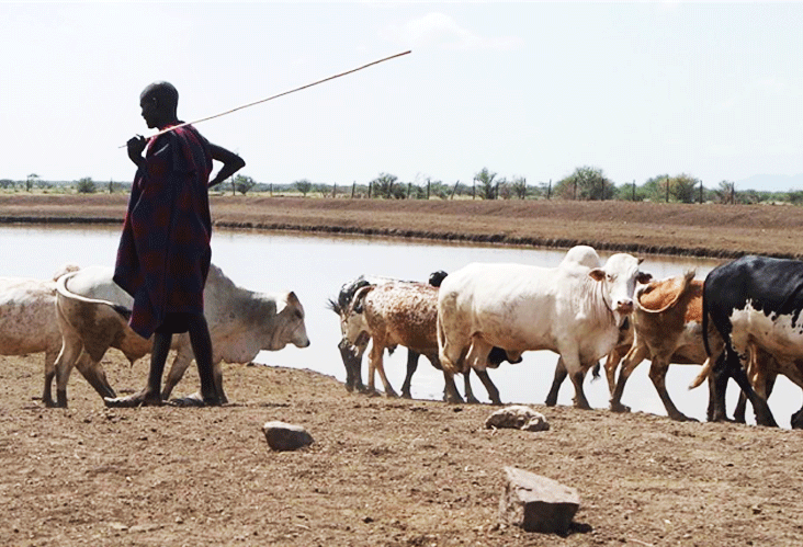 Piloting an Integrated, Economic and Ecological Grazing and Livestock Feed System for Agro-Pastoralist Communities in Karamoja, Uganda